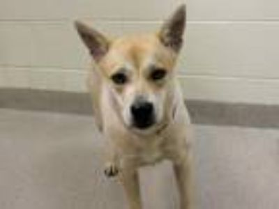 Adopt Tilly a Cattle Dog / Beagle / Mixed dog in Virginia Beach, VA (25587056)