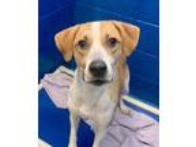 Adopt EZIO a Tan/Yellow/Fawn Hound (Unknown Type) / Mixed dog in Newport News