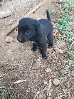Craigslist Dogs For Sale Classifieds In Rialto Ca Clazorg