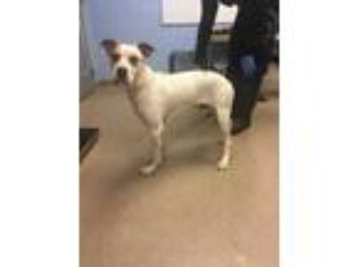 Adopt Frisco a White Mixed Breed (Large) / Mixed dog in Chamblee, GA (25877702)