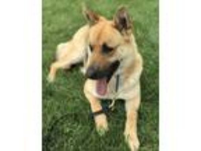 Adopt Emma a German Shepherd Dog / Mixed dog in Irvine, CA (25359655)