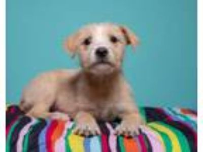 Adopt Sandy a Mixed Breed