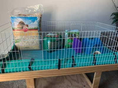 Guinea pig cage and stuff