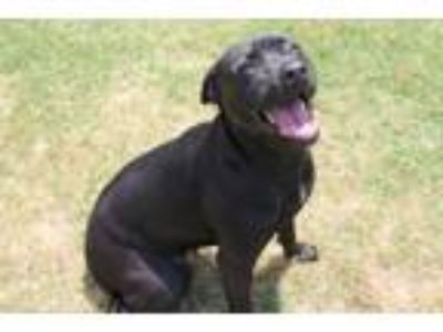 Adopt Shadow a Retriever