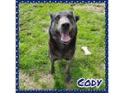 Adopt Cody a German Shepherd Dog, Hound