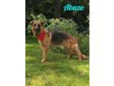 Adopt Abazo a German Shepherd Dog