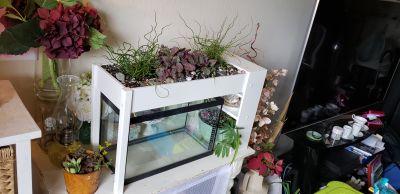 Over the aquarium planter w/ live plants