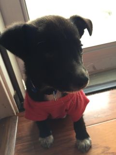 Free Mixed Male Puppy