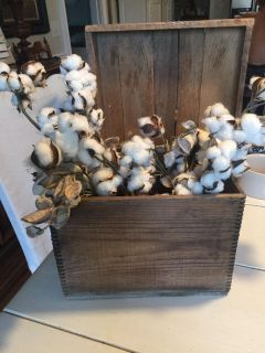 Vintage box and cotton stems