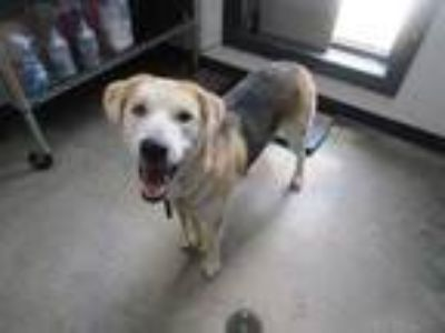 Adopt Meadow (See Memo) a Black Shepherd (Unknown Type) / Mixed dog in