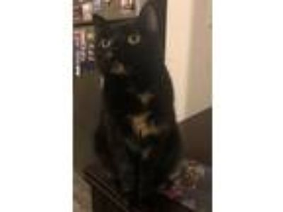 Craigslist Animals And Pets For Adoption Classifieds In Hutto