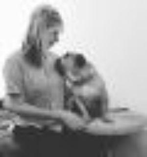 Bertie English Bulldog Dog