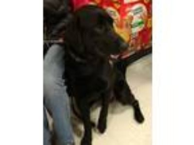 Adopt Carter *Adoption Pending* a Black Labrador Retriever / Mixed dog in Logan