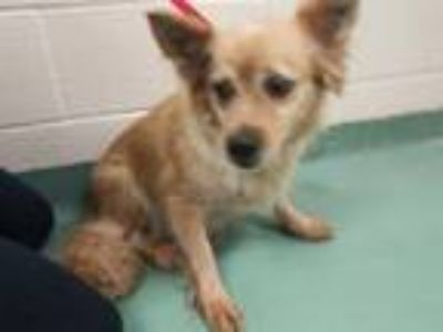 Adopt JAZZY #5 a Mixed Breed