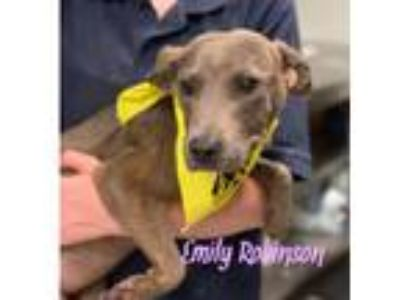Adopt Emily Robinson a Whippet