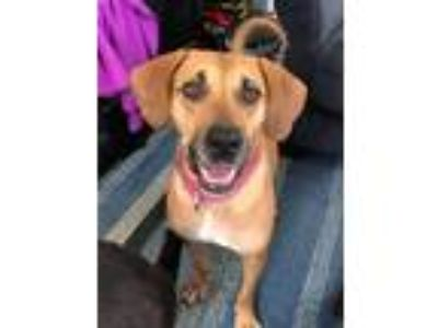 Adopt Heavens Tabetsy a Tan/Yellow/Fawn - with Black Hound (Unknown Type) /