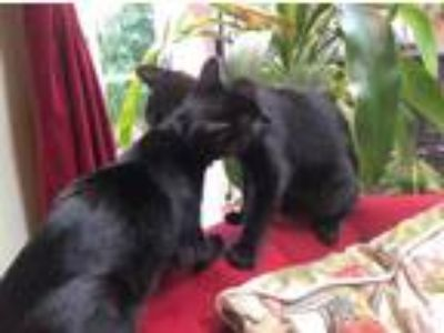 Adopt DOUGALL & FERGUS - Offered by Owner- SPECIAL NEEDS a Black (Mostly)