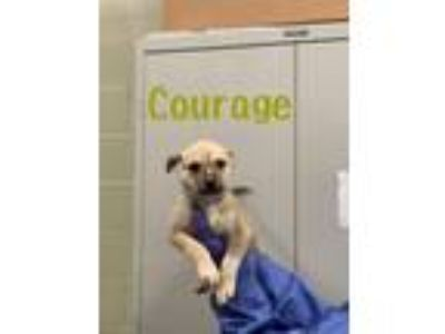 Adopt courage a Husky