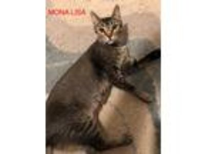 Adopt Mona Lisa a Brown Tabby Domestic Shorthair (short coat) cat in Tega Cay