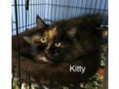 Adopt Kitty a Tortoiseshell Domestic Longhair (long coat) cat in Medway