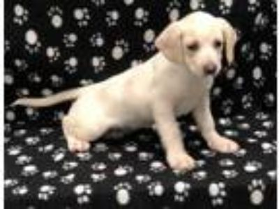 Adopt Gigi a White Terrier (Unknown Type, Small) / Mixed dog in Elkhorn