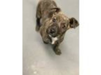 Adopt Sir Squibbles a Black Mixed Breed (Medium) / Mixed dog in Lafayette