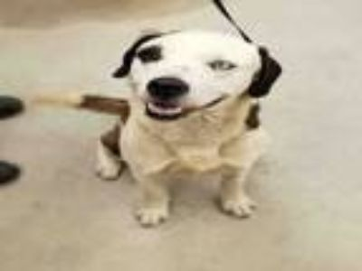 Adopt A414864 a Mixed Breed
