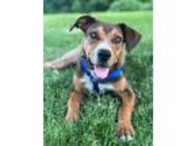 Adopt Brendan a Hound (Unknown Type) / Mixed Breed (Medium) / Mixed dog in