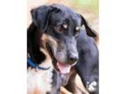 Adopt Beesly a Black Hound (Unknown Type) / Mixed dog in Lihue, HI (25592604)