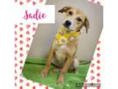 Adopt Sadie a Tan/Yellow/Fawn Labrador Retriever / Catahoula Leopard Dog / Mixed