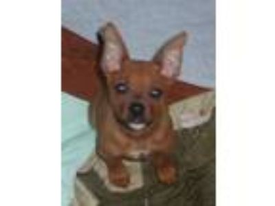 Adopt Carrie, Samantha, Miranda, And Charlotte a Tan/Yellow/Fawn - with Black