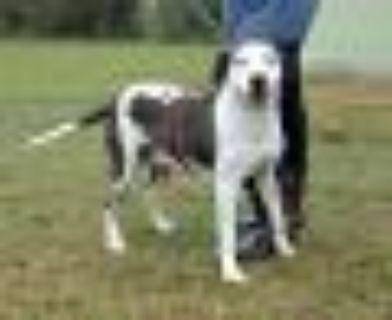Laura Dern Hound Dog