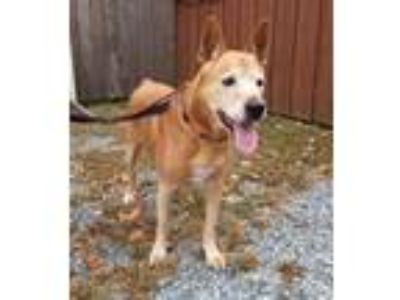 Adopt Stewy a German Shepherd Dog