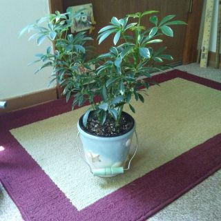 Beautiful House Plant 3 in 1 pot