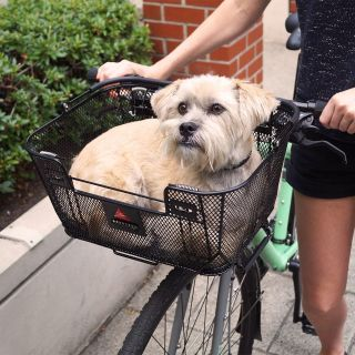 Dog Carrier (new with receipt)