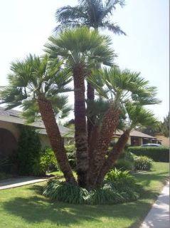 tree service best price