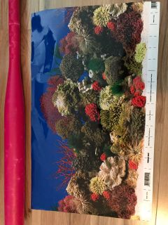 Aquarium Background (2 sided)