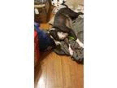 Adopt Bella a Black Terrier (Unknown Type, Medium) / Mixed dog in Berne