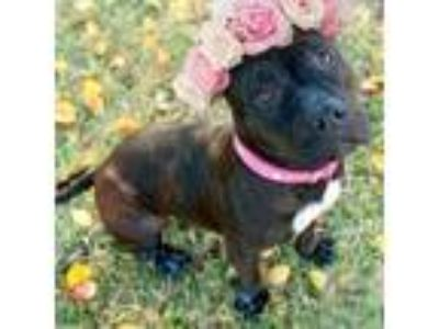 Adopt Sparkle - Your New BFF a Pit Bull Terrier