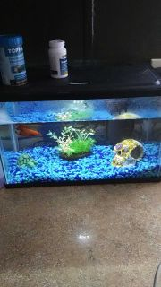 Red beta and tank