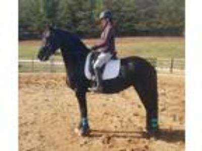 Reduced Price 2011 Riding Mare