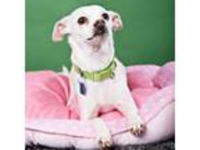 Adopt Libby a Mixed Breed