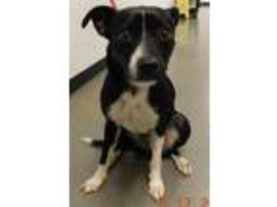 Adopt Pen 204c Maximus a Border Collie