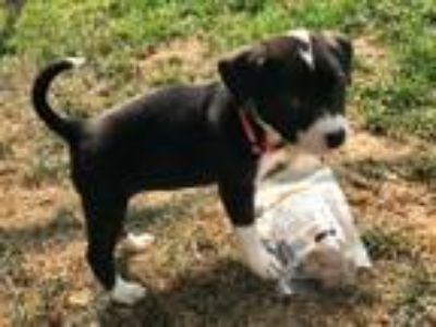 Adopt Willow a Terrier