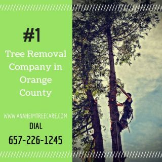 Tree Removal Orange County CA