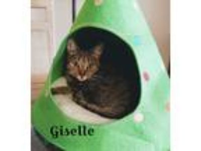 Adopt GISELLE a Tiger Striped Domestic Shorthair (short coat) cat in Fort