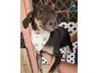 Adopt Zowie a Mixed Breed