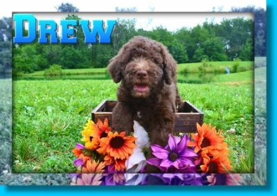 b>craigslist</b> - Dogs for Adoption Classifieds in Canton