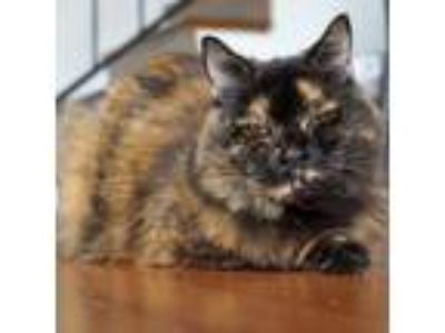 Adopt Sissy a Tortoiseshell Domestic Shorthair cat in Los Angeles, CA (21255459)