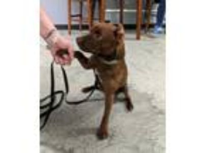 Adopt Tucker-I'm your dog! a Miniature Pinscher, Terrier